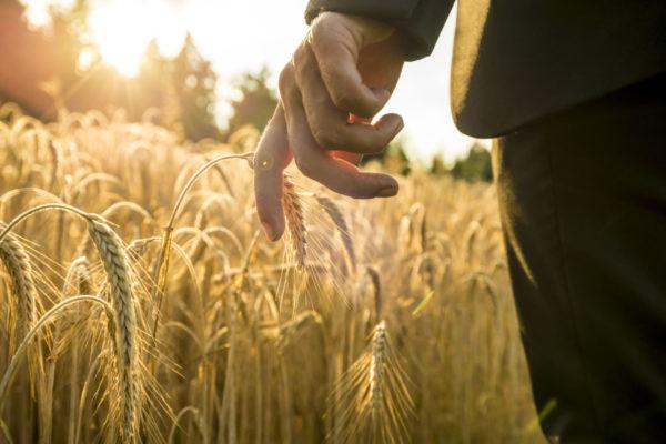 Kasvinsuojelututkinto-netissä