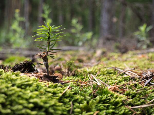 Kasvinsuojelututkinto_metsänhoidossa-netissä